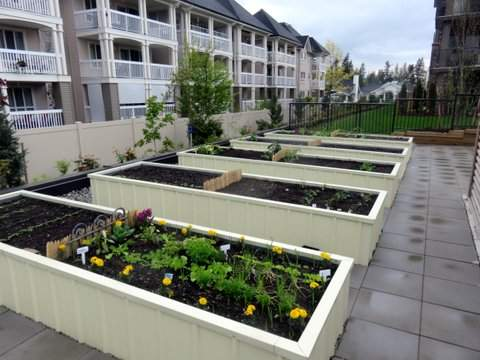 Lexington Court Apartments community garden